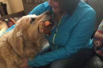 Dog Healing4