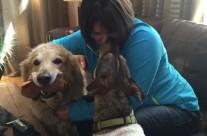 Dog Healing3