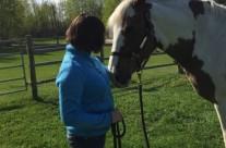 Horse Healing5