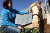 Horse Healing3