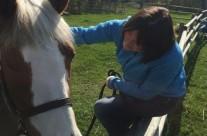Horse Healing4
