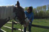 Horse Healing1
